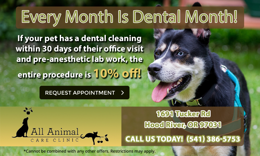 allanimalcareclinic_dentalspecial
